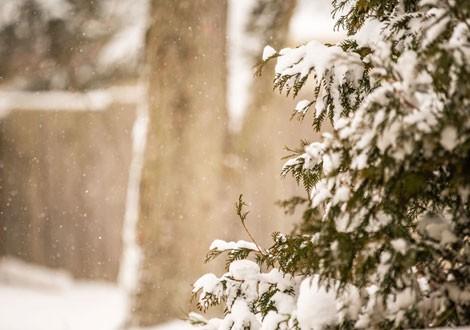 wintergeschenken